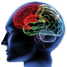 弱视和大脑